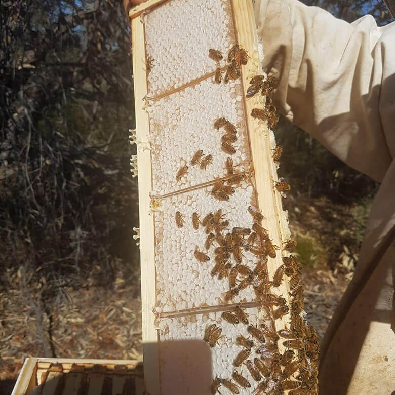 A BUZZ FROM THE BEES  レッドガムハニーTA30+60g